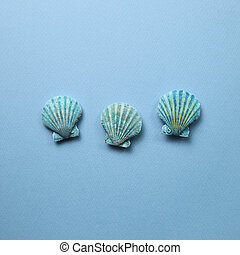 Blue seashells on blue background. Summer marine decoration. flat lay, top view, copy space