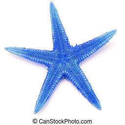 Blue seastar, isolated on white background.