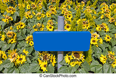 Empty Blue Sign in Field of Sunflowers
