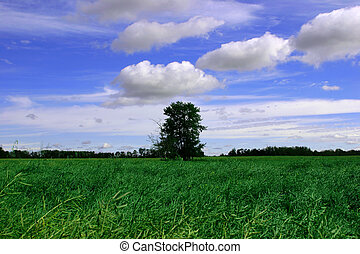 Blue Skies - A small clump of trees in the middle of a green...