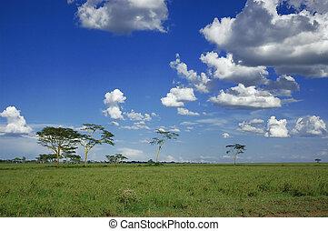 Blue Skies - Blue skies in the plains of Serengeti National ...