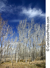 Blue Skies - Brilliant early spring blue skies contrast with...