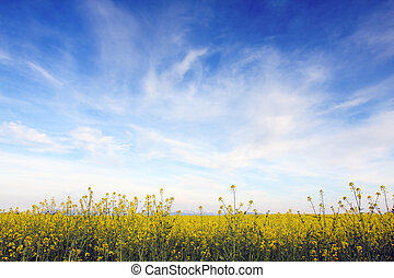 Blue sky against yellow field in a natural surrounding.