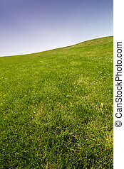 Blue sky and grass - Background of blue sky and green grass