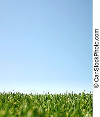 Blue sky and green grass:happyland - Blue sky with green...