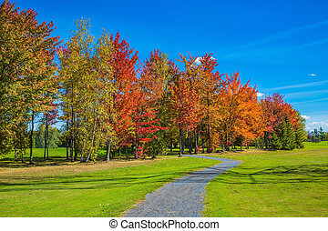 Blue sky and multi-colored trees - Warm sunny day on the...