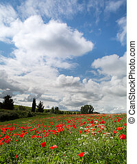 Blue sky and poppies in Tuscany