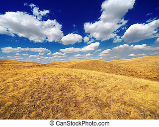 Blue sky and yellow fields