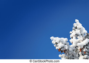 blue sky background with cones on fir