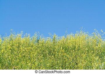 Blue sky. Grass.