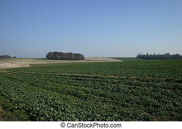 Blue Sky Green Field