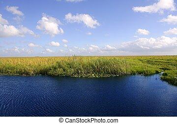Blue sky in Florida Everglades wetlands green plants...