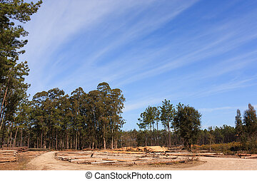 Blue sky over plain field with tree trunks pile on ground
