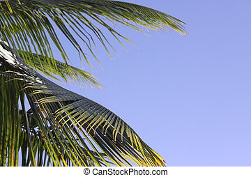 Blue sky Palm Frond - Palm Fronds with a blue sky backgroud....