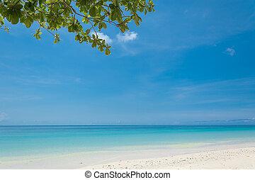 blue sky with beach sea and leaf