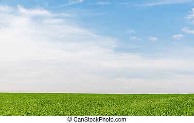 blue sky with clouds in sunset over green grass field