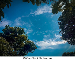 Blue sky with green tree