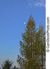 Blue Sky with Moon