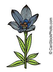 blue spotty lily.