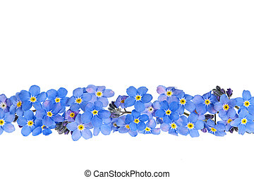 Blue spring flower border - Arrangement of blue...