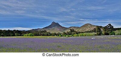 blue spring flowers... - Landscape with blue spring flowers...