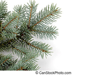 Blue Spruce Bough - blue spruce bough isolated on a white...