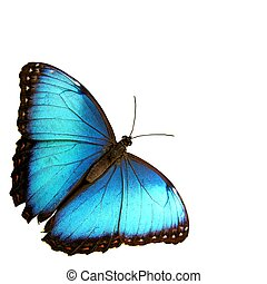 Blue - Isolated blue butterfly...