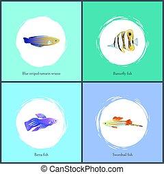 Blue Striped Tamarin and Betta Vector Illustration - Blue...