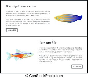 Blue Striped Tamarin Wrasse Vector Illustration - Blue...