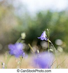 Blue summer flower closeup