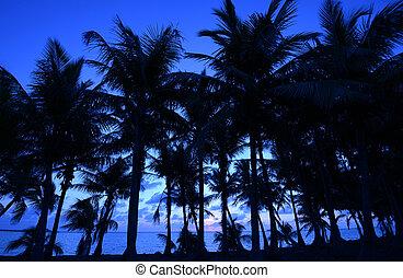 blue színárnyalat, pálma fa, óceán