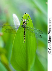 Blue tailed Damselfly on blurred background, France