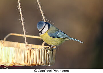 blue tit at a seed feeder