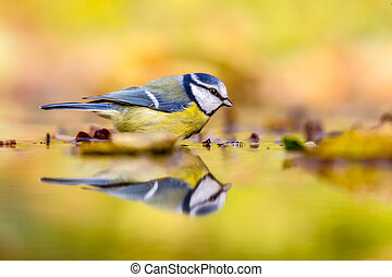 Blue tit autumn background