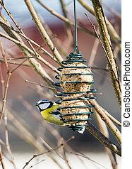 Blue tit bird eating at a bird feeder