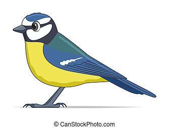 Blue tit bird on a white background