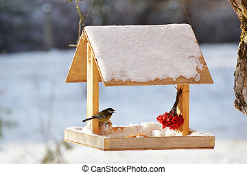Blue tit eating from garden bird feeder