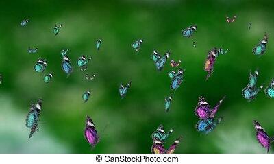 blue tone mass butterfly
