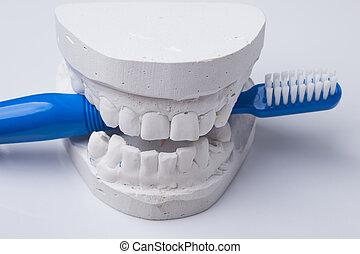 Blue toothbrush with dental gypsum