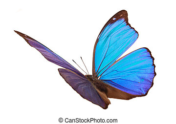 Blue tropical butterfly. - Closeup shot of blue butterfly...