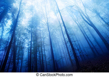 Blue twilight mood in a foggy wood - Blue twilight mood in a...