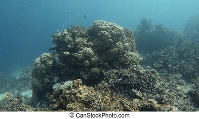 Blue underwater coral reef
