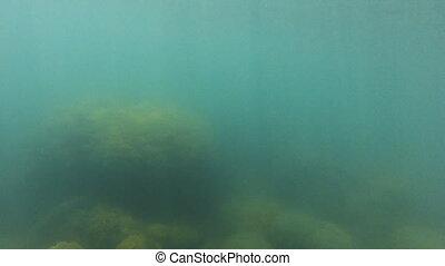 Blue underwater ocean