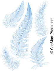set of smooth blue feathers, vector