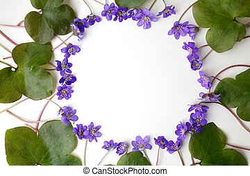 blue viola flowers frame on white background. Flat lay, top...