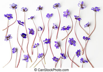 blue viola flowers on white background. Flat lay,