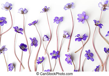 blue viola flowers on white background. Flat lay, top view -...