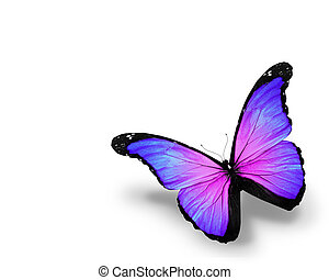 Blue violet butterfly, isolated on white background