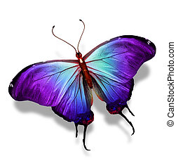 Blue violet butterfly