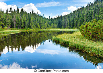 Blue water in a forest lake